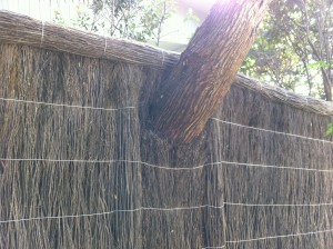 Fence through tree - Copy